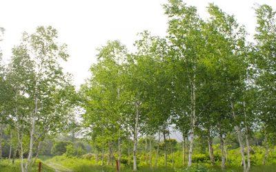 森のそば。今年のおしながき。