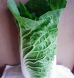 11月19日は野菜が!