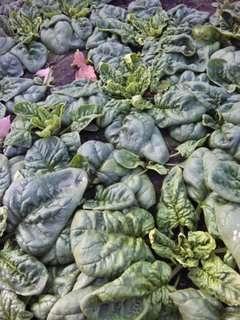 お野菜も並びます!